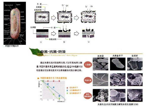 抗菌防霉图片2.jpg